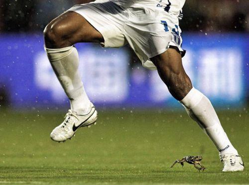 サッカー試合中のピッチで危機一髪のカエルが激写される